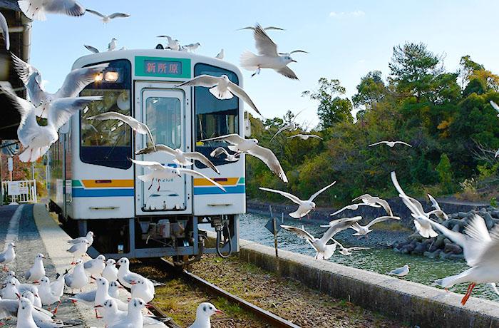 天浜線佐久米駅でカモメと記念撮影